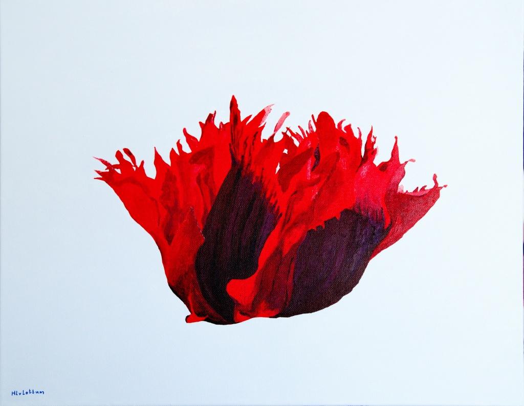 Papaver - acryl op canvas 50 x 40 cm