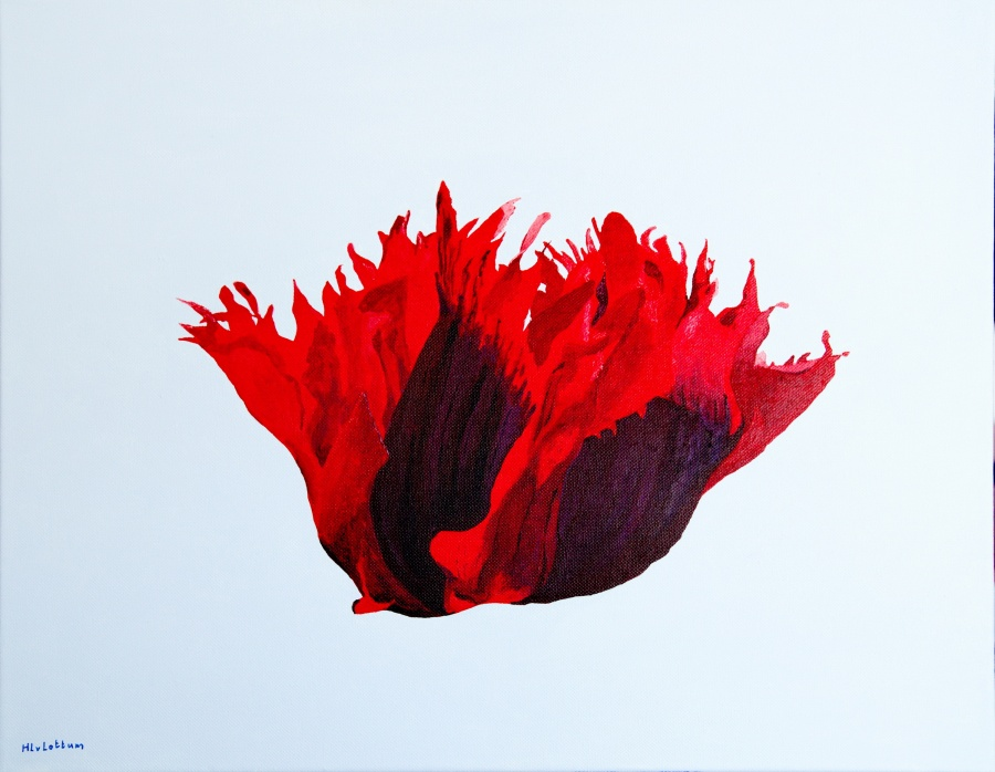 Papaver - acryl op canvas - 50 x 40 cm
