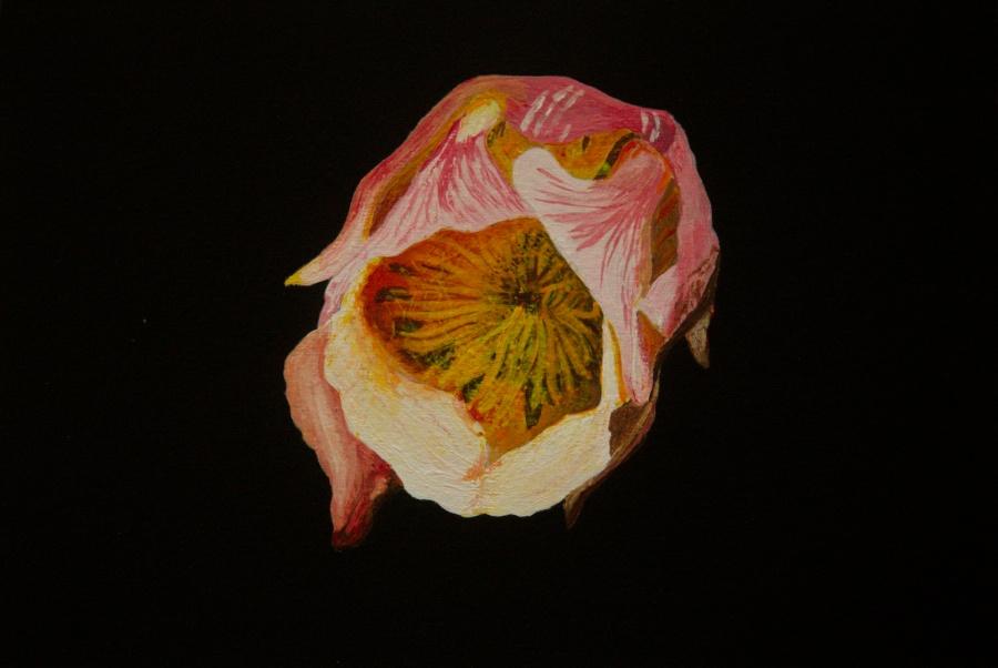 Knikkend nagelkruid acryl op karton 15x22,5 cm
