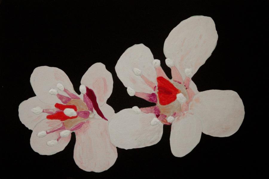 Schildblad acryl op karton 15x22,5 cm