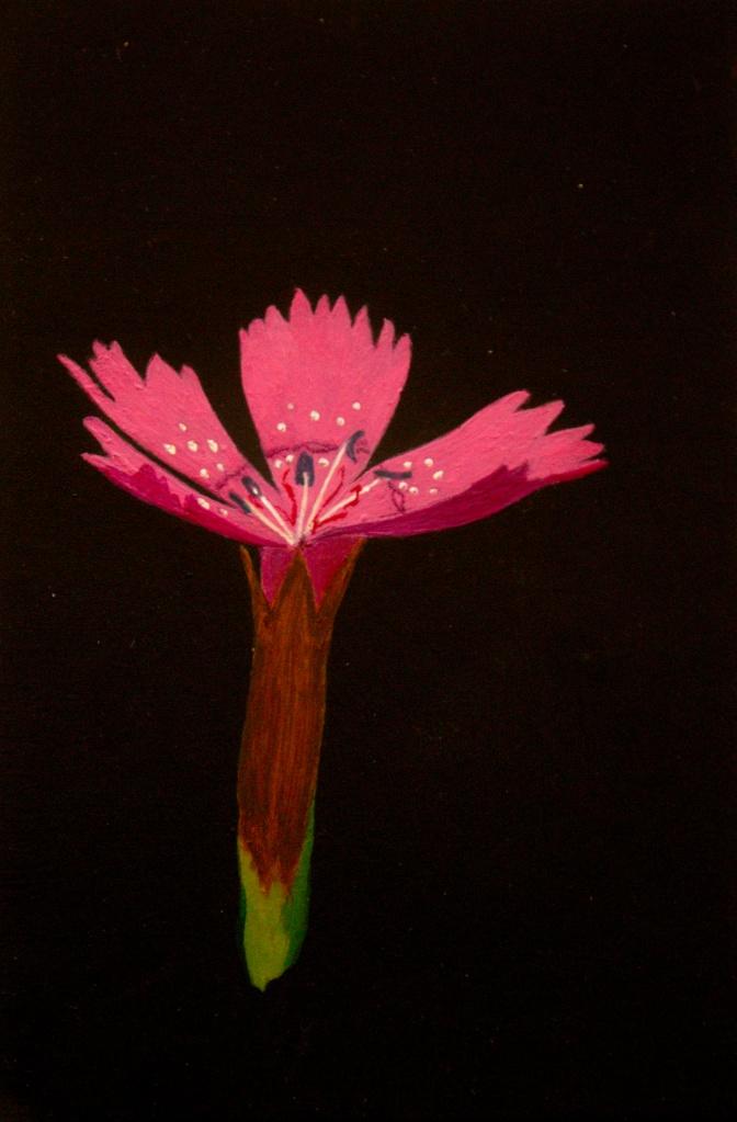 Steenanjer acryl op karton 15x22,5 cm
