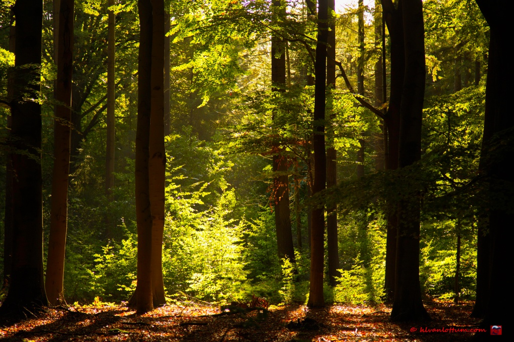 Licht, in bos bij Joppe
