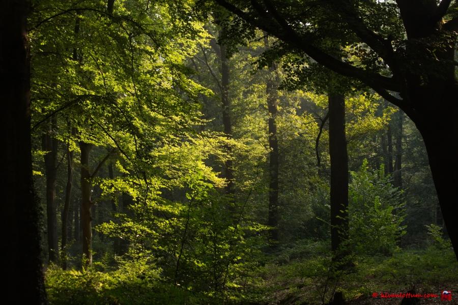 Nazomer licht, landgoed Dorth