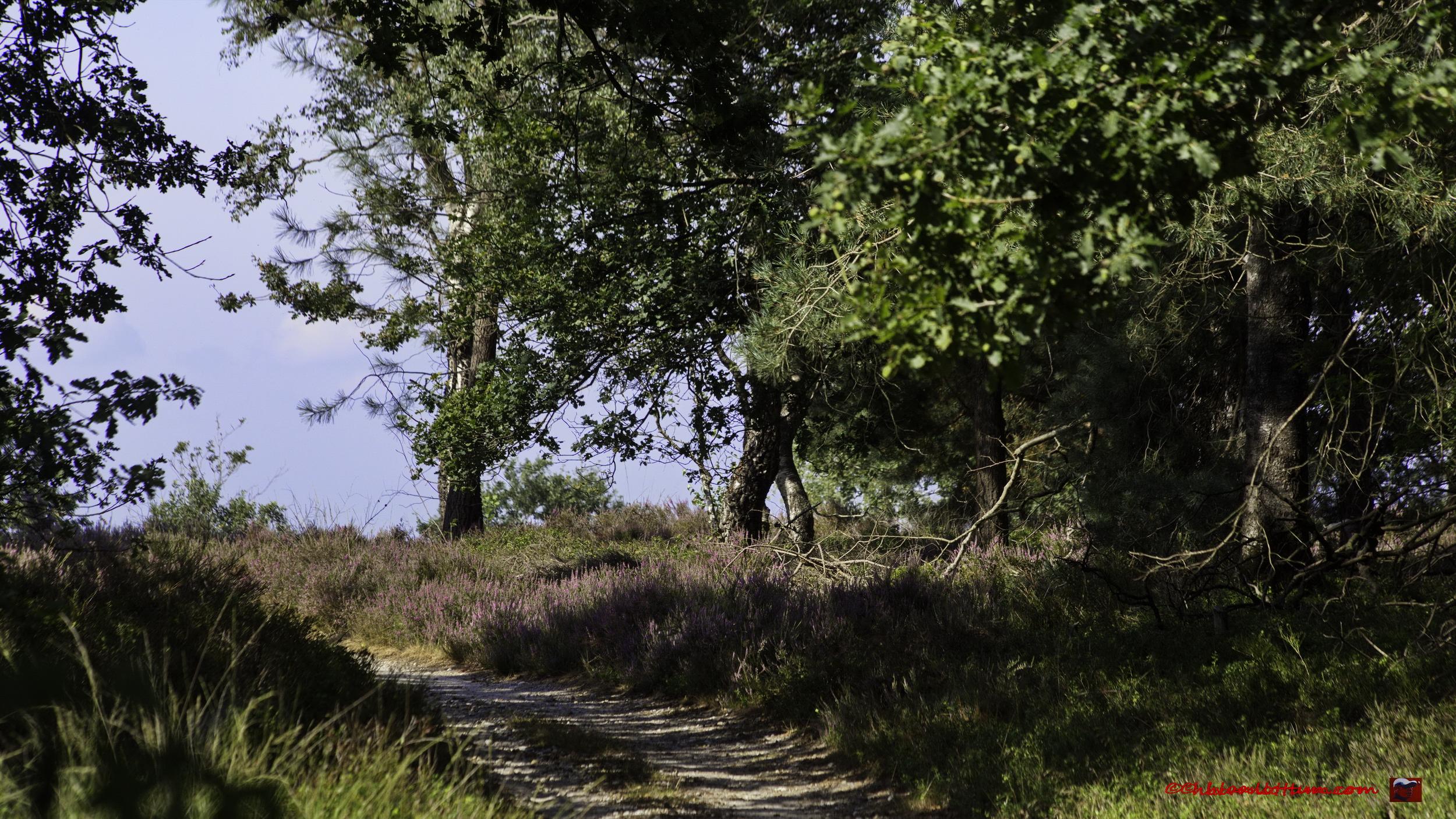 Heidepad op de Holterberg