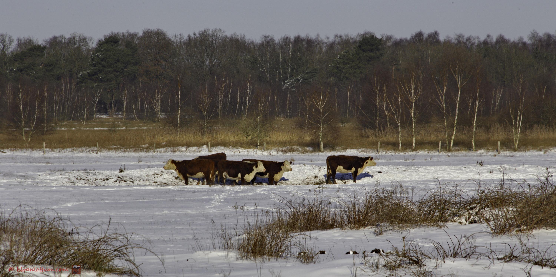 In de sneeuw - Borkeld Markelo