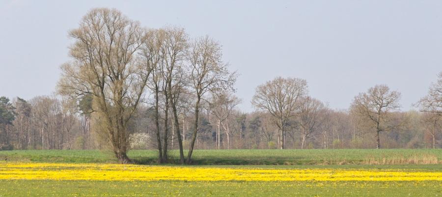Voorjaar, Beekvliet Borculo