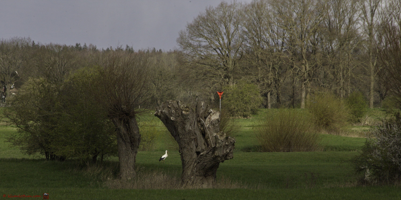 Ooievaar langs de IJssel, Ravenswaarden Gorssel