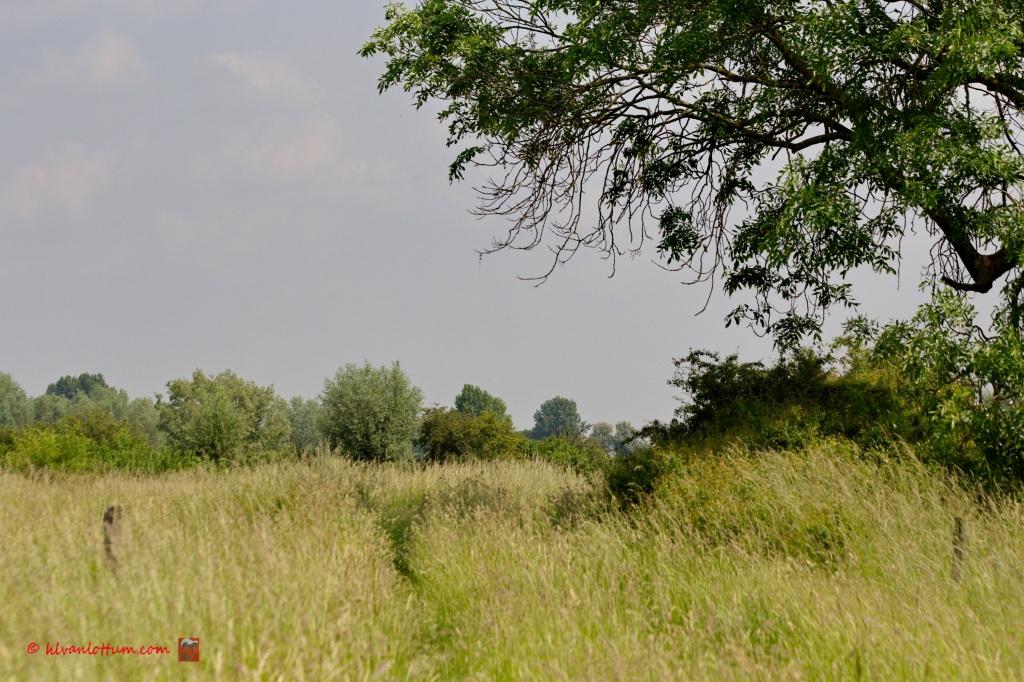 Ruig gras - Ravenswaarden Gorssel